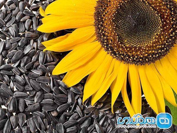 6 فایده تخمه آفتابگردان برای سلامتی